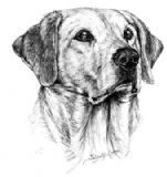 Golden Labrador Personalised Greetings Card